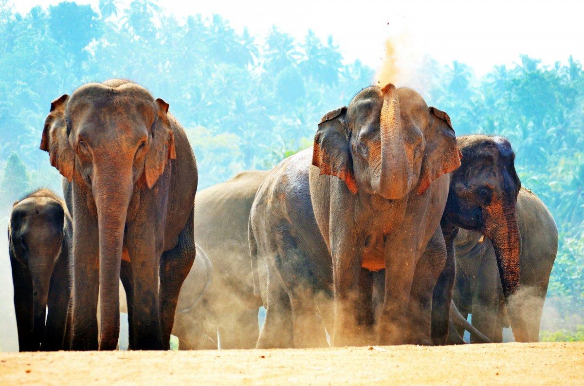 Екскурзия в ШРИ ЛАНКА - Перлите на Шри Ланка - с директен чартърен полет от София!