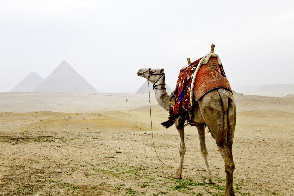 Почивка Комбинирана програма в ЕГИПЕТ 2020 - 1 нощувка в Кайро и 6 нощувки в Ел Гуна