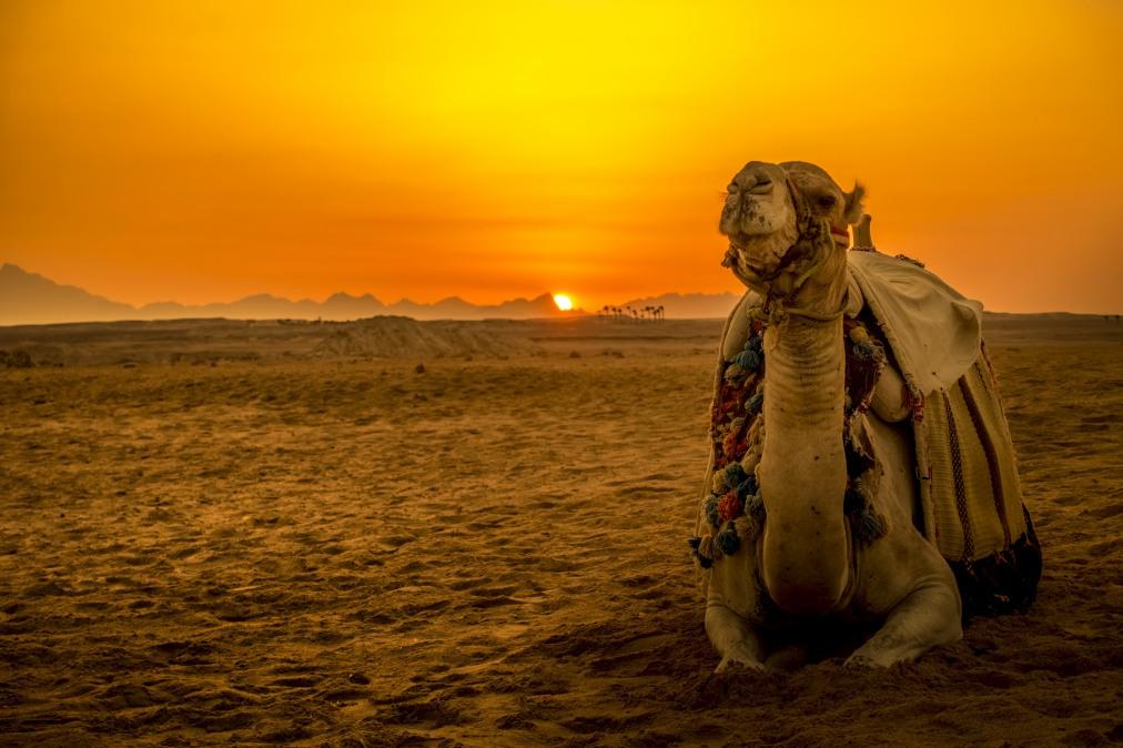 Почивка Комбинирана програма в ЕГИПЕТ 2020 - 1 нощувка в Кайро и 6 нощувки в Макади Бей   РАННИ ЗАПИСВАНИЯ